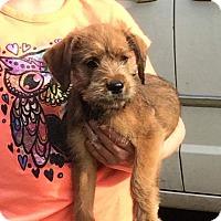 Adopt A Pet :: Russ - Providence, RI