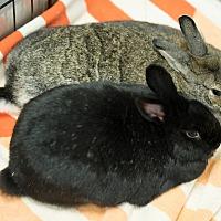 Adopt A Pet :: Gabby & Lexxy - Montclair, CA