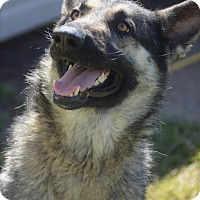 Adopt A Pet :: Hoda 💜 ADOPTED! - Saratoga Springs, NY