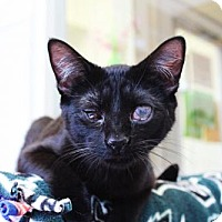 Adopt A Pet :: *Borges and Bellows* - Philadelphia, PA