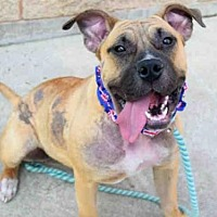 Adopt A Pet :: SEDONA - Aurora, IL