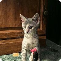 Adopt A Pet :: Tina - Wrightsville, PA