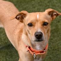 Adopt A Pet :: Gunther - Sedona, AZ