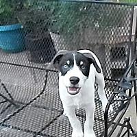 Adopt A Pet :: Ranger - Wichita Falls, TX