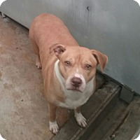 Adopt A Pet :: Carmen - Elizabeth, NJ