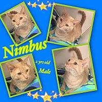 Adopt A Pet :: Nimbus - Siler City, NC
