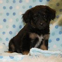 Adopt A Pet :: Buster - Meridian, MS