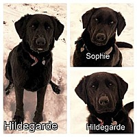 Adopt A Pet :: Hildegarde & Sophie - Medora, IN