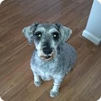 Adopt A Pet :: Obie - North Benton, OH