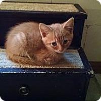 Adopt A Pet :: Brody - Sterling Hgts, MI