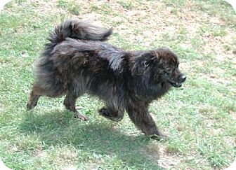 Pomeranian Mix Dog for adoption in Wetumpka, Alabama - #80446 'Maddie'