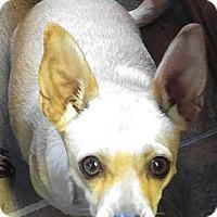 Adopt A Pet :: Tic Tac - Arenas Valley, NM