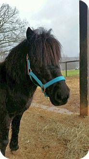 Pony - Other Mix for adoption in Huntsville, Alabama - Slade
