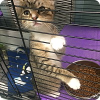Adopt A Pet :: Jasmine - Richboro, PA