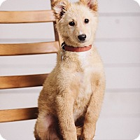 Adopt A Pet :: Cedar - Portland, OR