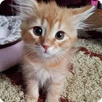 Adopt A Pet :: Albert - Barrington, NJ