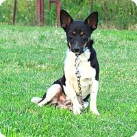 Adopt A Pet :: RALLY - Bedminster, NJ