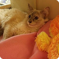 Adopt A Pet :: Sunset - Winchester, CA