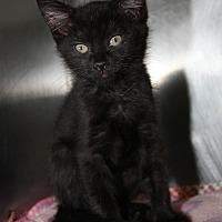 Adopt A Pet :: Sweet Pea - Marietta, OH