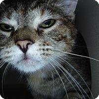 Adopt A Pet :: Tabby - Hamburg, NY