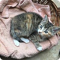 Adopt A Pet :: Kate - Crossville, TN