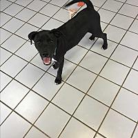 Adopt A Pet :: Toby - Broken Arrow, OK