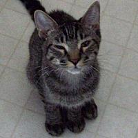 Adopt A Pet :: Buzz - Waller, TX