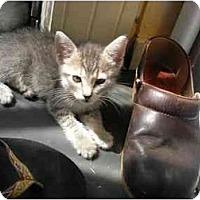 Adopt A Pet :: Rachel - Davis, CA