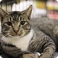 Adopt A Pet :: George - Sacramento, CA