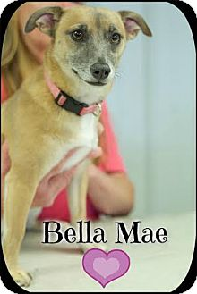 Terrier (Unknown Type, Small)/Feist Mix Dog for adoption in Washington, D.C. - Bella Mae (Pom-dc)