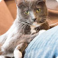 Adopt A Pet :: Michael - Chicago, IL