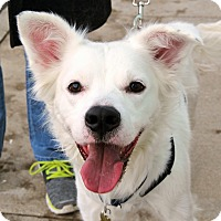 Adopt A Pet :: Jack Frost - Richmond, VA