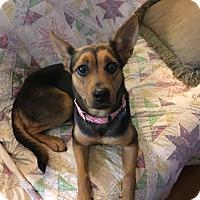 Adopt A Pet :: Sheba - Raritan, NJ