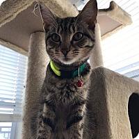 Adopt A Pet :: McCoy - Stafford, VA