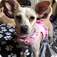Adopt A Pet :: Tandy - San Diego, CA