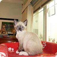 Adopt A Pet :: Samantha aka Sammy - Los Angeles, CA