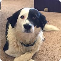 Adopt A Pet :: CASEY - San Pedro, CA