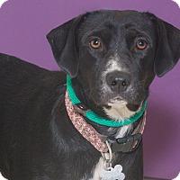 Adopt A Pet :: Gypsy - Elmwood Park, NJ
