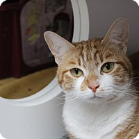 Adopt A Pet :: 'purr'simmon - Muskegon, MI