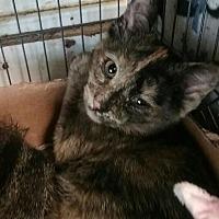 Adopt A Pet :: Poppy - Bay City, MI