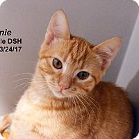Adopt A Pet :: Dennie - Lincoln, NE