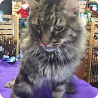Adopt A Pet :: Maui - Southlake, TX