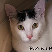Adopt A Pet :: Ramble - Texarkana, AR