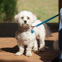Adopt A Pet :: Nibbles - Jackson, MI