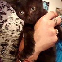Adopt A Pet :: JUPITER - Hazlet, NJ