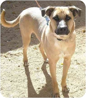 German Shepherd Dog Mix Dog for adoption in Edwards AFB, California - Bailey