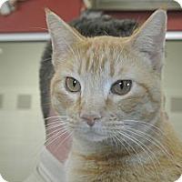 Adopt A Pet :: Sharlotte - white settlment, TX