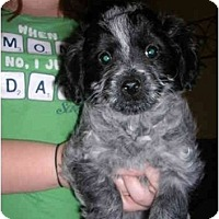 Adopt A Pet :: Pluto - Glastonbury, CT