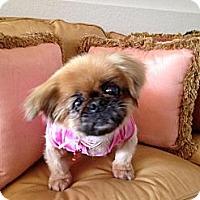 Adopt A Pet :: Sonja - Davie, FL