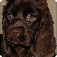 Adopt A Pet :: Grace - Sugarland, TX
